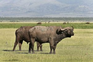 Manyara Serengeti & Ngorongoro  4 DAYS & 3 NIGHTS