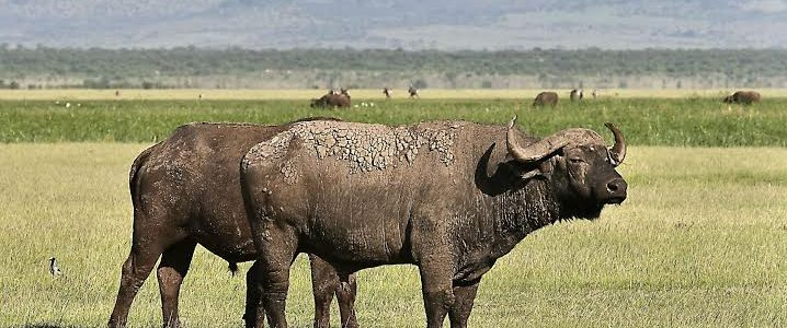 Samburu Game Reserve, Shaba, Buffalo Springs National Reserve, Masai Mara & Amboseli National Park – 9 Days & 8 Nights