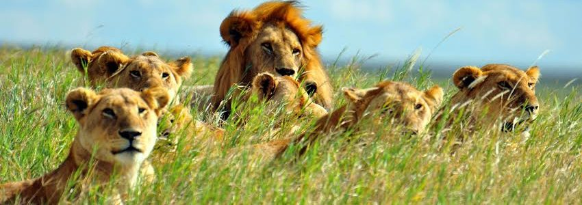 Murchison Falls National Park, Kibale Forest National Park, Crater Lakes, Queen Elizabeth National Park, Lake Mutanda, Batwa Trail, Bwindi National Park& Lake Bunyonyi – 14 Days & 13 Nights