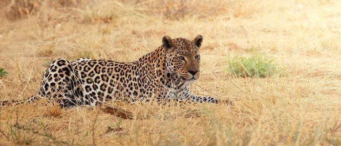 Ngorongoro Crater Safari, Serengeti National Park – 14 Days & 3 Nights