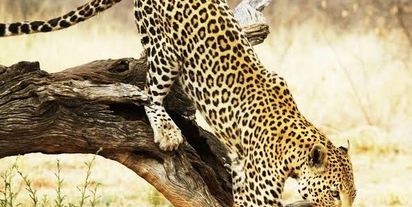 Lake Manyara, Serengeti, Ngorongoro, Tarangire – 9 Days & 8 Nights