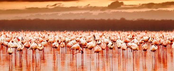 Tarangire, Ngorongoro & Serengeti National Park – 12 Days & 11 Nights