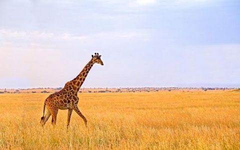 Tarangire, Lake manyara, Serengeti & Ngorongoro – 6 Days & 5 Nights