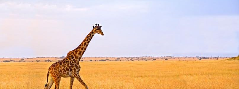 Tarangire, Lake manyara, Serengeti & Ngorongoro – 6 Days & 5 Nights