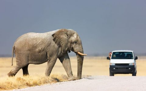 Manyara, Serengeti & Ngorongoro – 4 Days 3 Nights