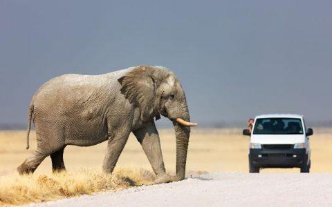 Manyara, Serengeti & Ngorongoro – 4 Days 3 Nights