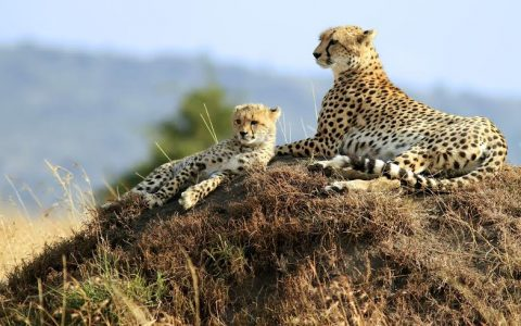 Serengeti and Ngorongoro – 3 Days  2 Nights