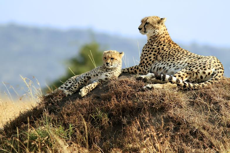 Serengeti and Ngorongoro – 3 Days 2 Nights